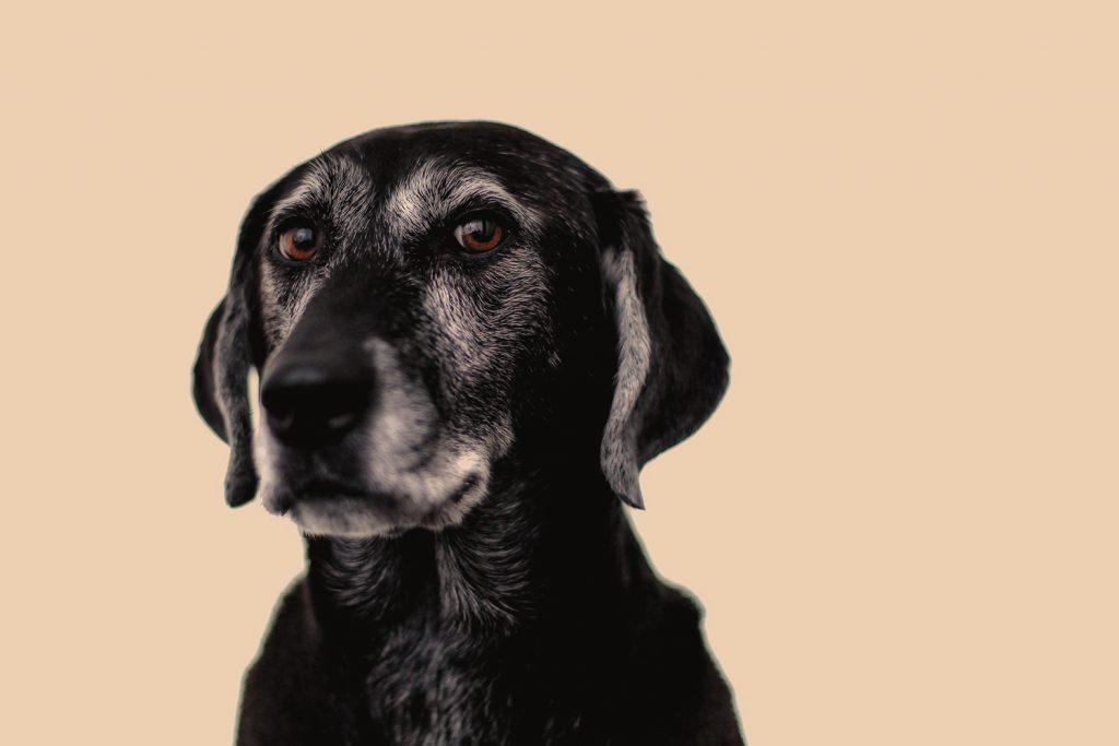 Now Offering In-Studio Pet Photography