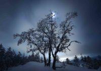 snowy tree and moon